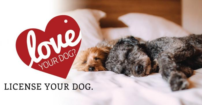 Love your dog? License your dog.